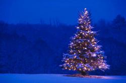 ^^ Feliz Navidad ^^